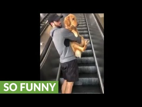 Scared dog needs to be carried up escalator