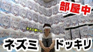【ドッキリ】打倒シルク!ネズミ200匹部屋中に貼ったらぶっ倒れた thumbnail