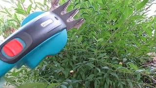 видео Бирючина обыкновенная: посадка и уход виды размножение