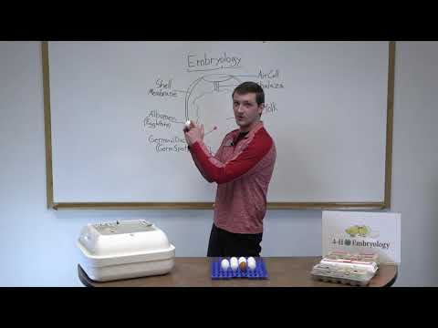 4-H Embryology Initial Classroom Presentation