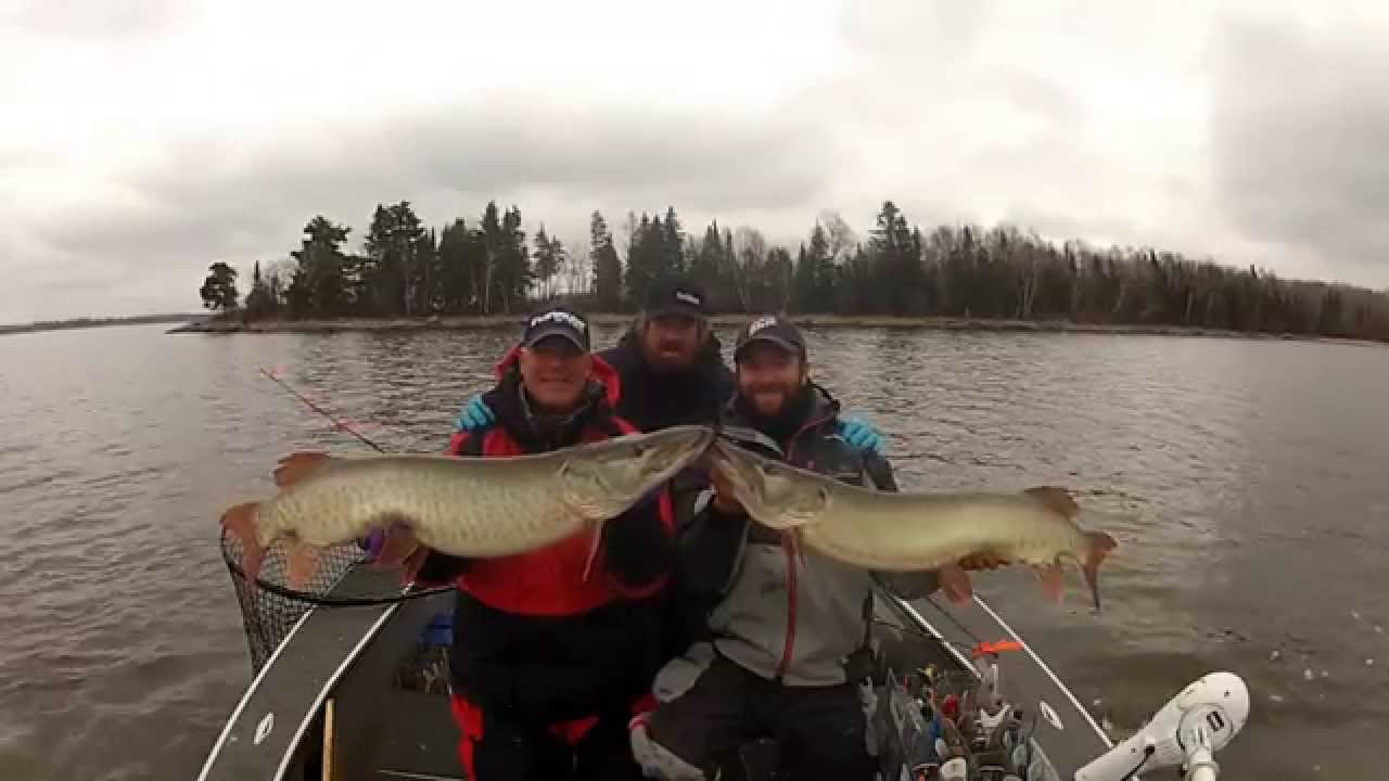 Muskie Double Header Lake Of The Woods Youtube