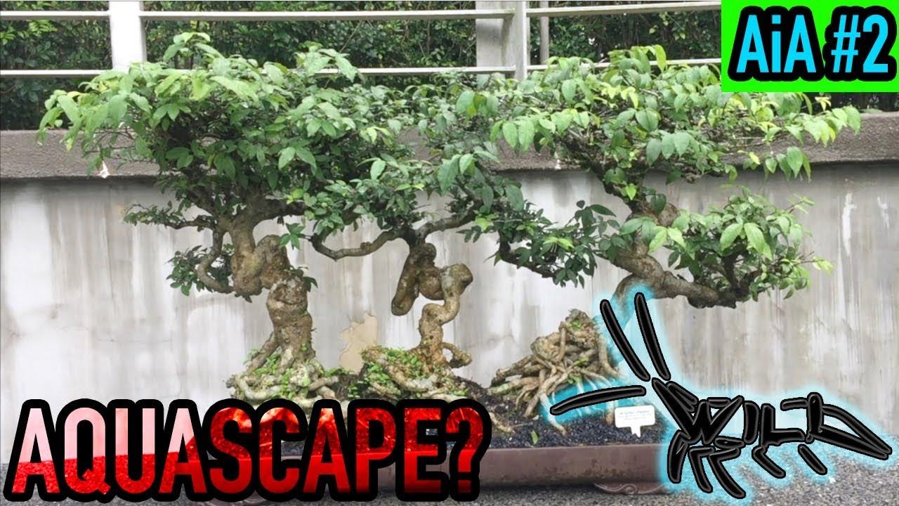 Aquascape Inspiration Bonsai Garden Bonsai Driftwood Aquascaping Ideas For Moss Aia 2 Youtube