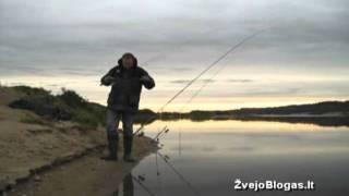 Lydeka ant slieko Nemune / Pike caught o...