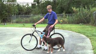 Changing Canines - Running Your Dog While Riding Your Bike