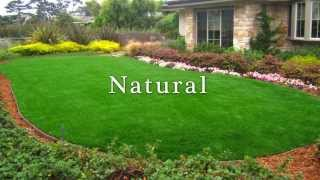 Astro Turf Putting Greens Artificial Dog Grass Installation: Castle Rock Co - Call Us @ 720.221.3606
