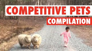 Ultimate Pet Competitions || Competitive Pets
