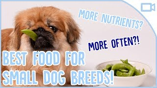 Best Dog Foods for Small Breeds! - Have you recently brought a smal...