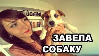 ЗАВЕЛА СОБАКУ || ДЖЕК РАССЕЛ