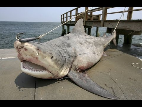 How To Cut Huge Shark In Just Few Minutes 🐳🎬