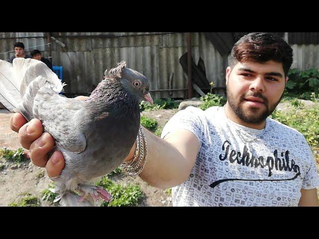 İstanbul Avcılar, ALİCANın Ankara Taklacı Güvercini - 539.681.79.06