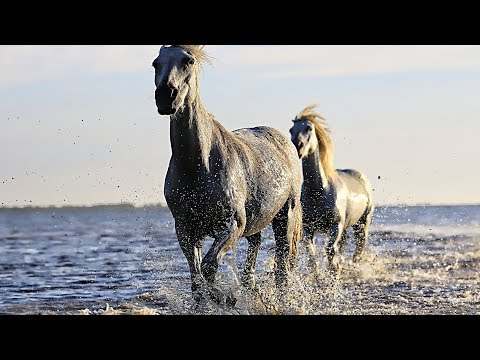 Free Horse Stock Images With CC0 Licenses With No Attribution Required For Commercial Use