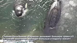 #китоваятюрьма Косатёнышу очень плохо!
