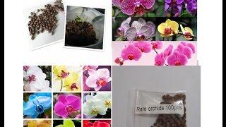 Что на самом деле растет из семян Орхидеи с Китая.Семена орхидеи из Китая