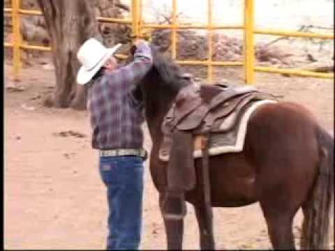 'Como amansar caballos sin golpes'