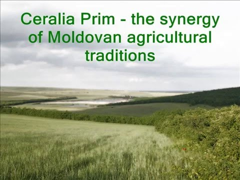 Wheat, Corn, Barley and Sunflower from Moldova