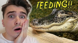 feeding-rj-he-went-crazy