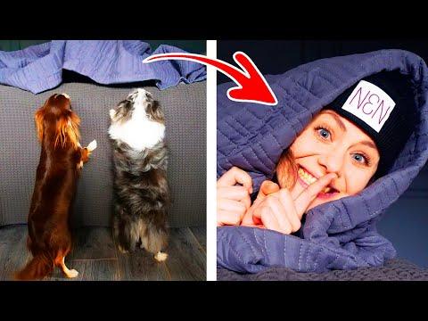 Безумные Прятки с Собаками в Доме! Прячусь от собак в странных местах, кто найдет меня первым?