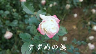 オリジナルは、桂銀淑さんの歌唱で1987年にリリースされました。 も...