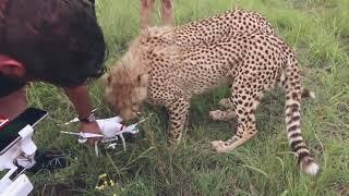 Коты против квадрокоптеров ,это война ! Cats vs drones