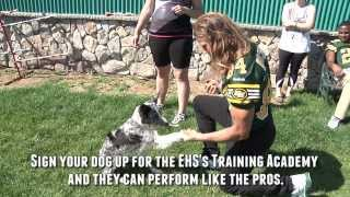 Racing Koch Edmonton Eskimo And Ehs Agility Psa