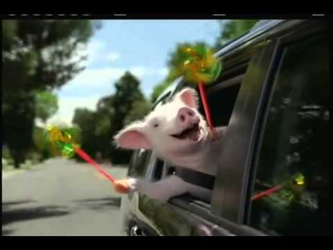 Geico Commercial Three Little Pigs Wee Weee Weeee