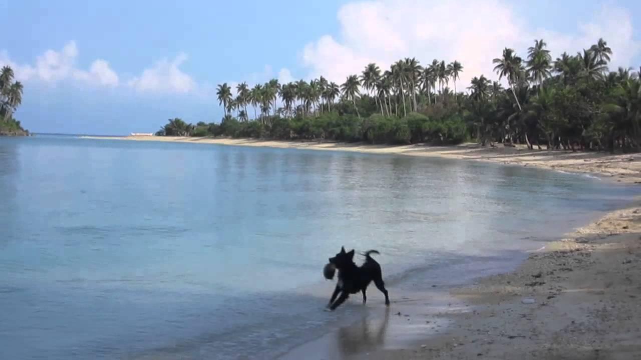 watching this dogs at binucot beach resort and binucot sunset cove rh youtube com