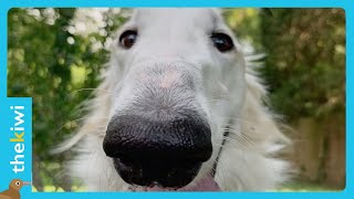 Meet the dog with the world's longest snout
