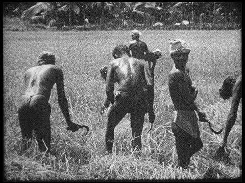 SriLankan suku puoli video