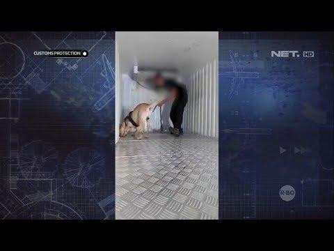 BNN Gunakan Anjing Pelacak dan Temukan Ganja yang Disembunyikan dalam Truk - Customs Protection
