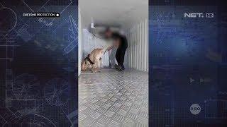 vuclip BNN Gunakan Anjing Pelacak dan Temukan Ganja yang Disembunyikan dalam Truk - Customs Protection