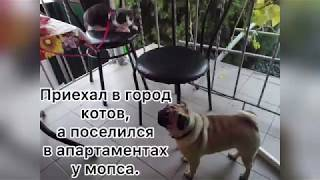 Каникулы кота в Крыму.