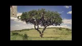 Владимир Высоцкий - Песенка про жирафа и антилопу