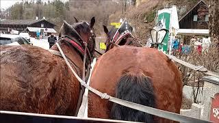 Neuschwanstein Castle Horse Carriages