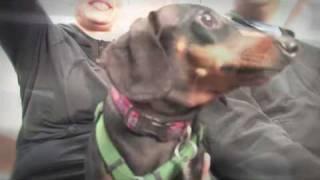 "Calgary Dog Spa - ""pawsitively Pooched""  Bizboxtv Calgary Internet Marketing Video"