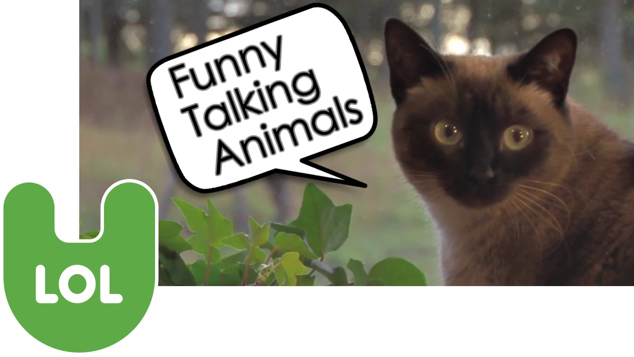 how to make a talking animal video
