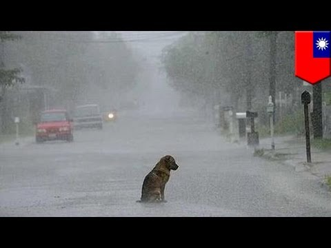 Loyal dog waits for owner: Abandoned pet waits for two years for master to return