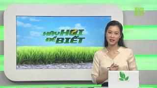 Kinh nghiệm trồng cây kim ngân   Hãy hỏi để biết 04/09/2019   VTC16