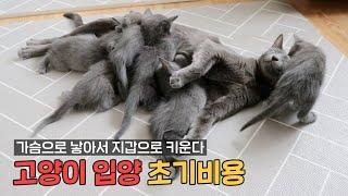 고양이 입양 초기비용!…