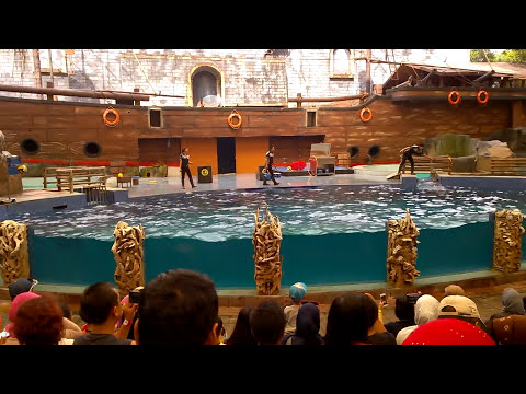 Atraksi Dolphins and Friends, Taman Safari Indonesia II