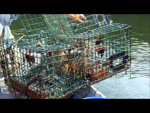 How to Set and Check Lobster Traps thumbnail