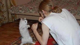 Очень смешные коты)