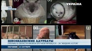Коты жидкие или твердые?