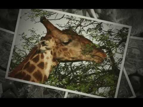 Africa Slideshow 2013