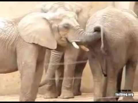 from Niko woman gets fucked by elephant