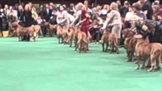 135th Westminster Dog Show - Dogue De Bordeaux Judging