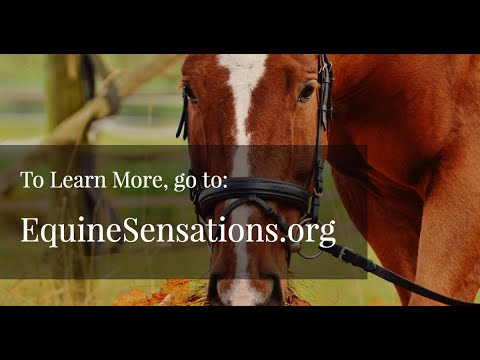 B.R.E.A.T.H.E. Equine Therapy Presentation brought to you by Steam Springs Media