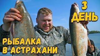 Ловля крупного ЖЕРЕХА в Астраханской области Рыбалка на реке Бузан Балык из жереха Полевая кухня