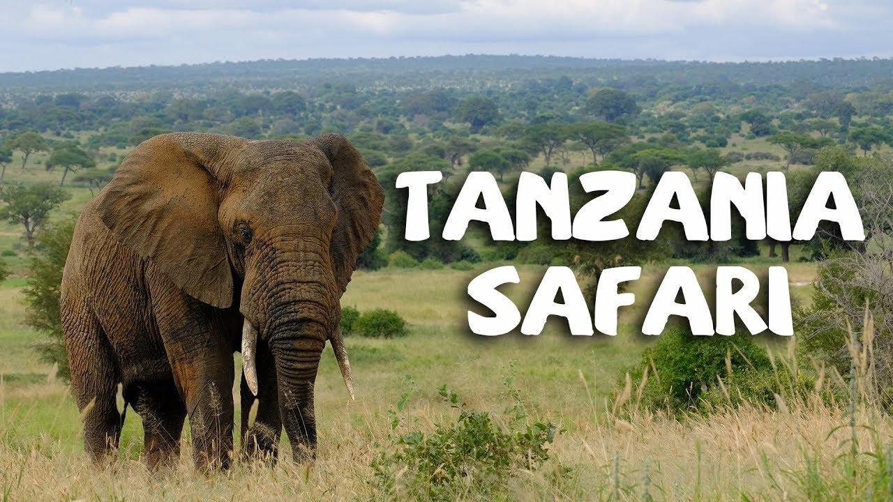 Download Tanzania Safari 2018