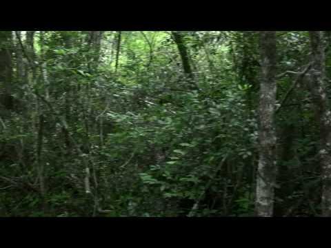 Georgia's Okefenokee Swamp