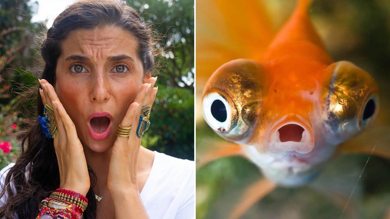 Why I'll NEVER Eat Fish AGAIN...
